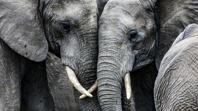 Sprawiliśmy, że przez 50 lat liczebność zwierząt spadła o 68 procent. Raport WWF
