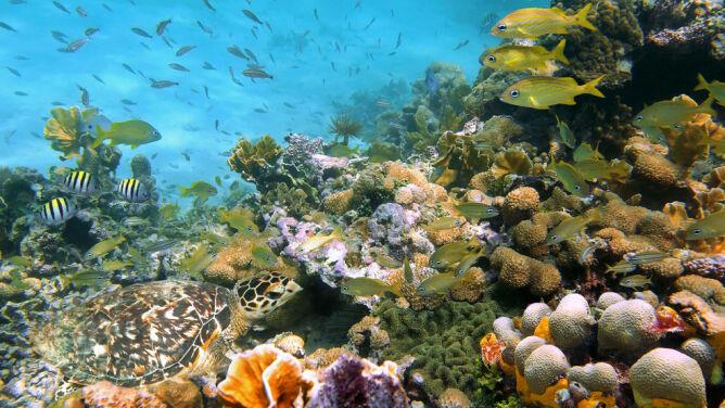 Przez 25 lat straciliśmy ponad połowę Wielkiej Rafy Koralowej
