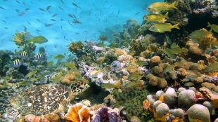 """""""Niektóre tereny całkowicie stracą przynajmniej jeden gatunek koralowców"""""""