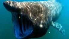 W Irlandii rekin pływał z kajakarzami