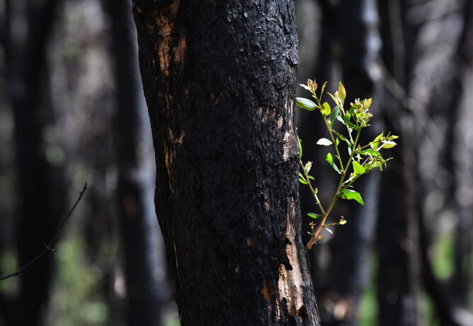 Natura wraca do życia (PAP/EPA/DARREN ENGLAND)