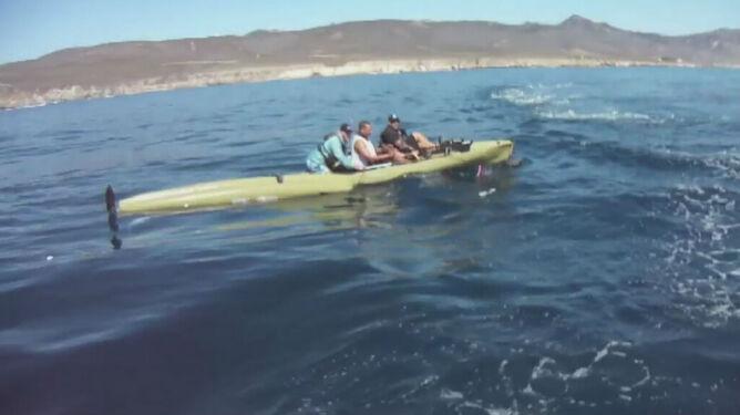 Rekin zaatakował kajakarzy. Bliskie spotkanie mrożące krew w żyłach
